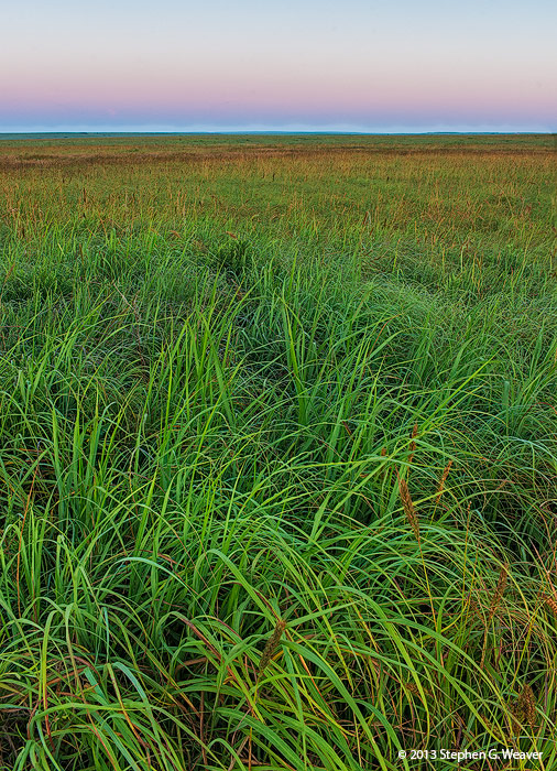 Tall Grass Prairie,grass,prairie,Oklahoma, dawn , photo