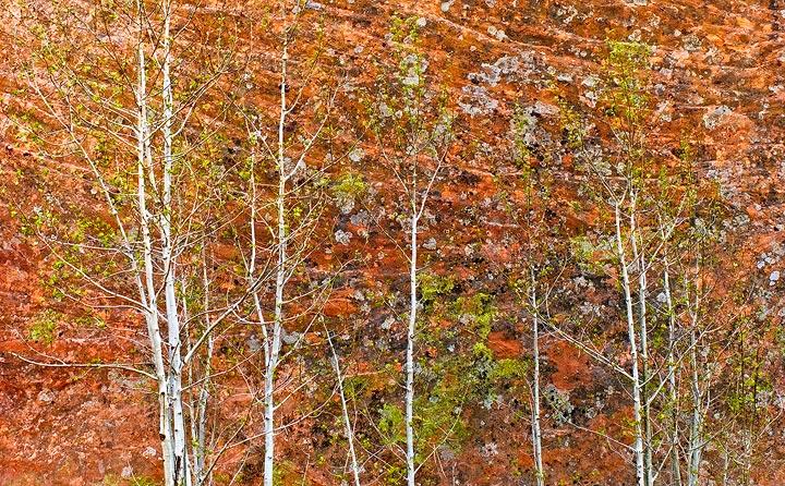 Colorado Springs, Red Rock Canyon,Lyons Sandstone, aspen, photo
