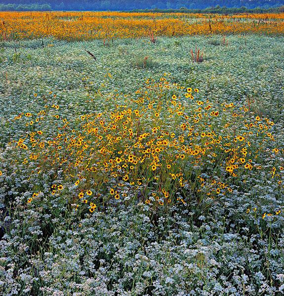 wildflowers         , photo