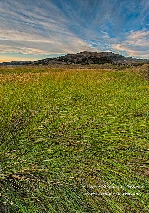 Montana, Charles M. Russell NWR, grass, photo