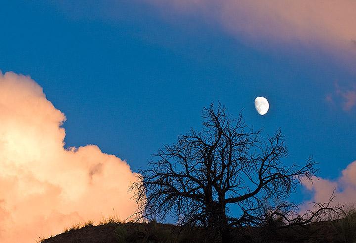moon,tree,clouds              , photo