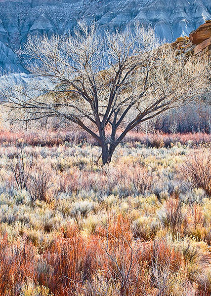 tree,cottonwood,sage,willows,Utah,Fremont River,Winter               	, photo