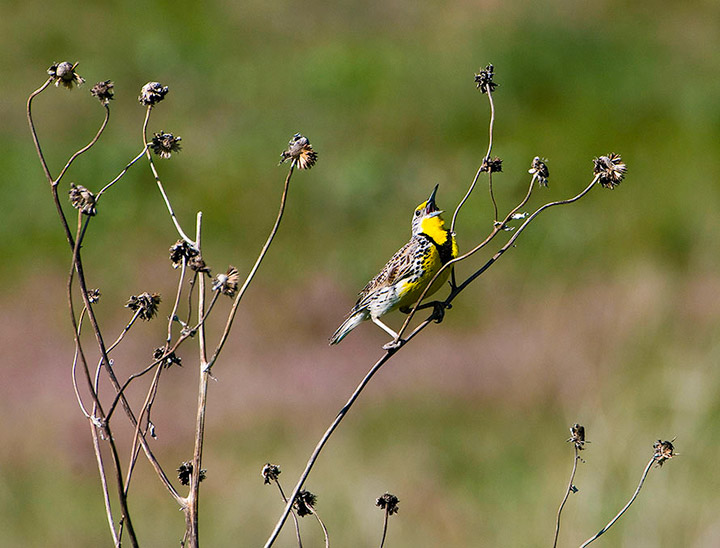 birds        , photo