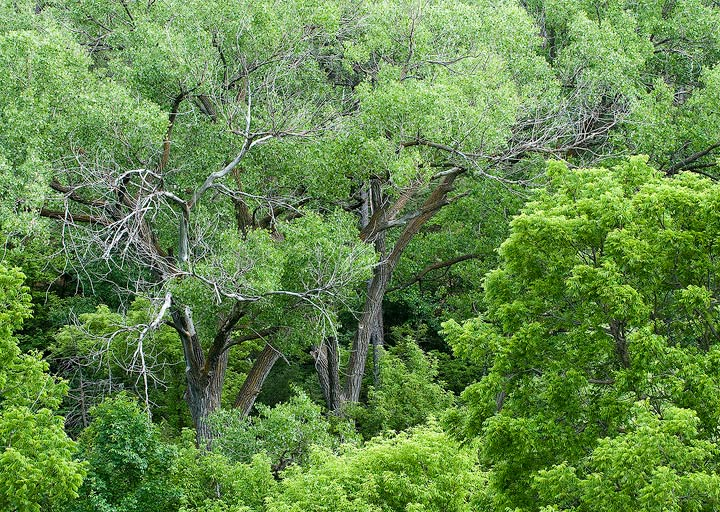 Nebraska, Sand Hills,forests                , photo