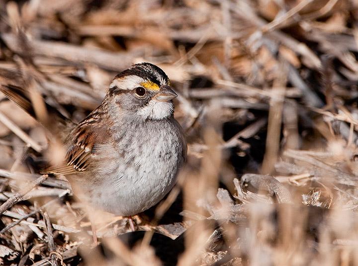 birds, photo