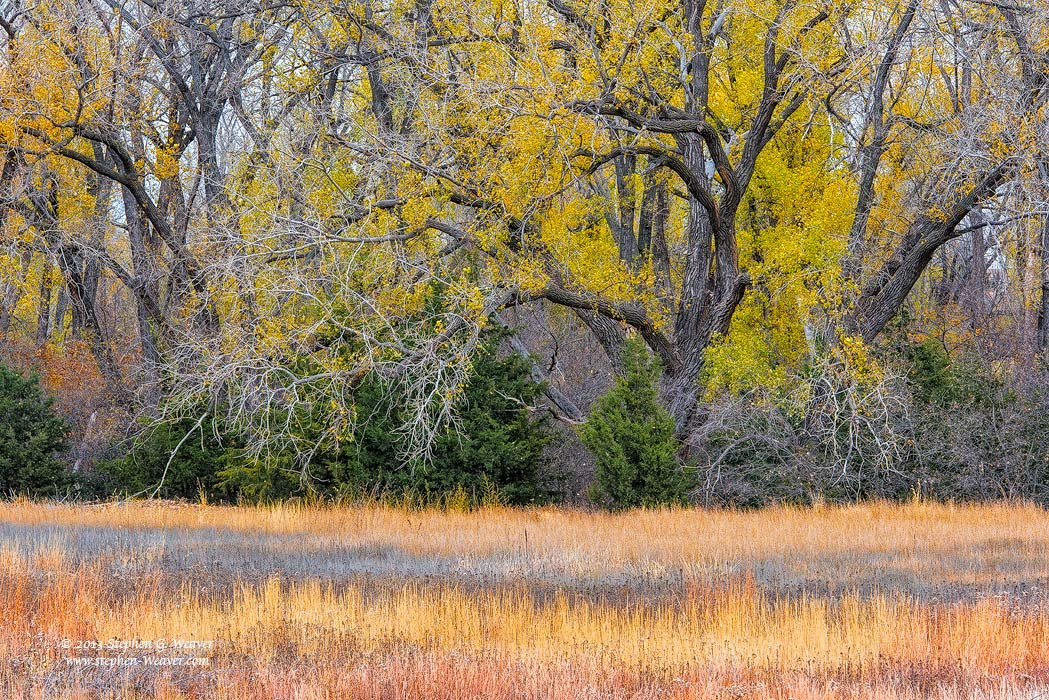 Autumn, Fall Color, Kansas, photo