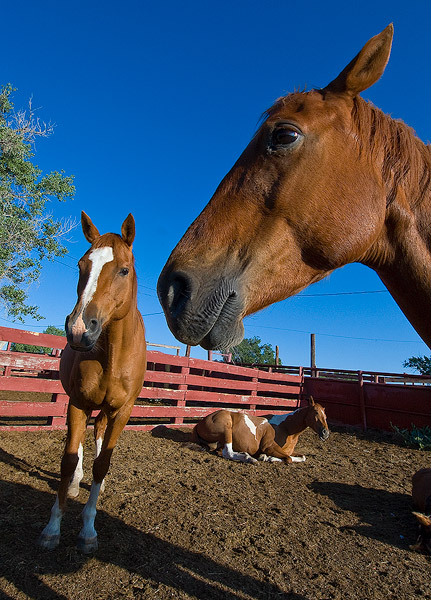 Chico Basin Ranch, horses