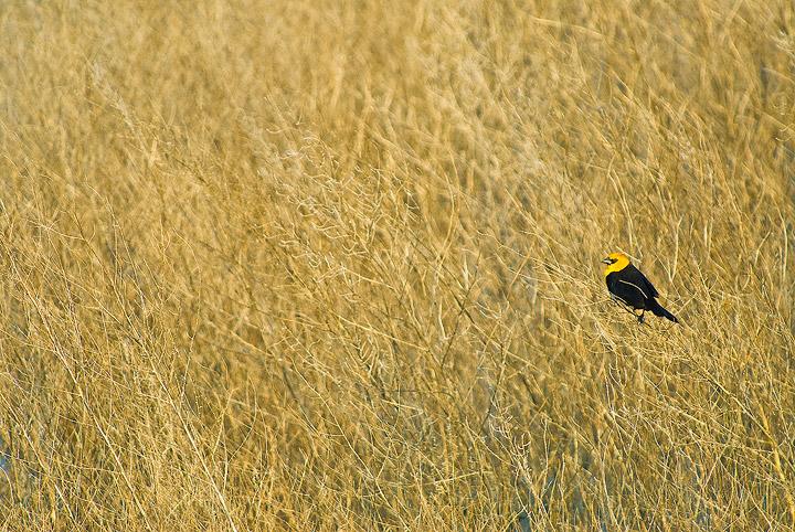 birds,Kansas, photo