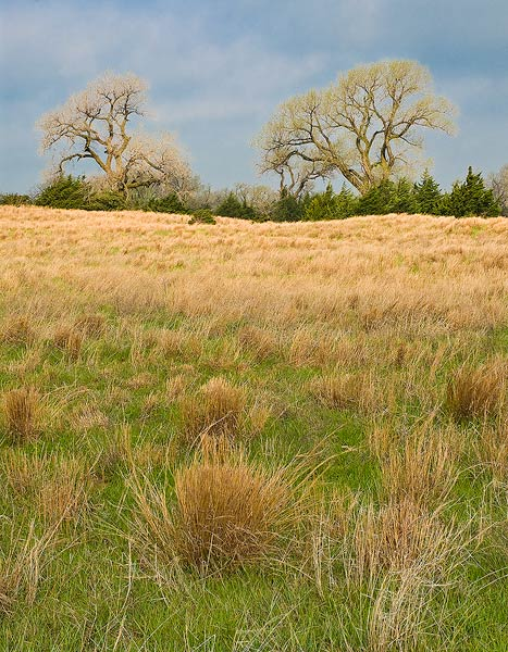 Kansas, Quivira National Wildlife Refuge