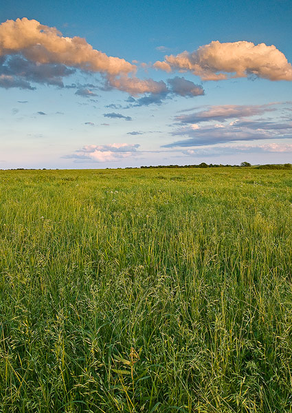 Nature Conservancy, Oklahoma, Spring, Tall Grass Prairie Preserve,grass,prairie