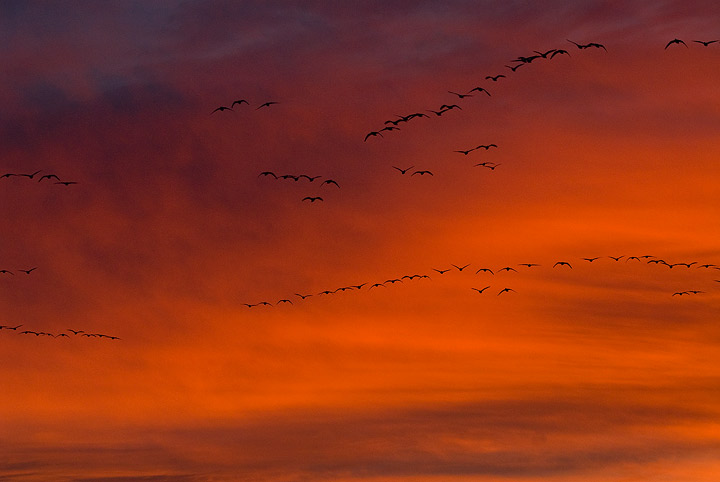 birds,sunrise, photo
