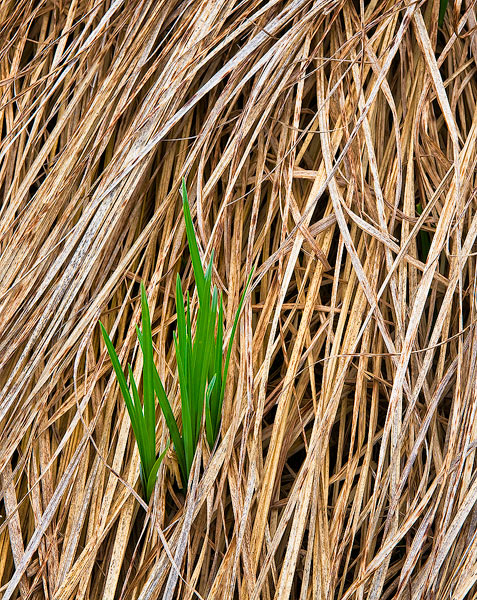 grass,Ucross Ranch,Spring,green, photo