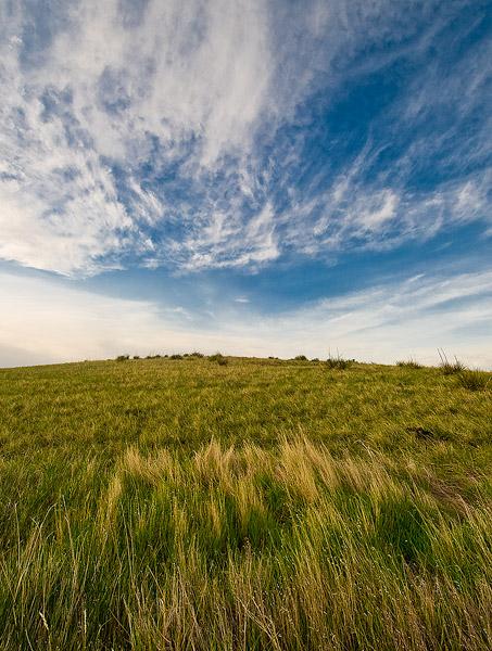 Spring, Ucross Ranch, Wyoming, grass                , photo