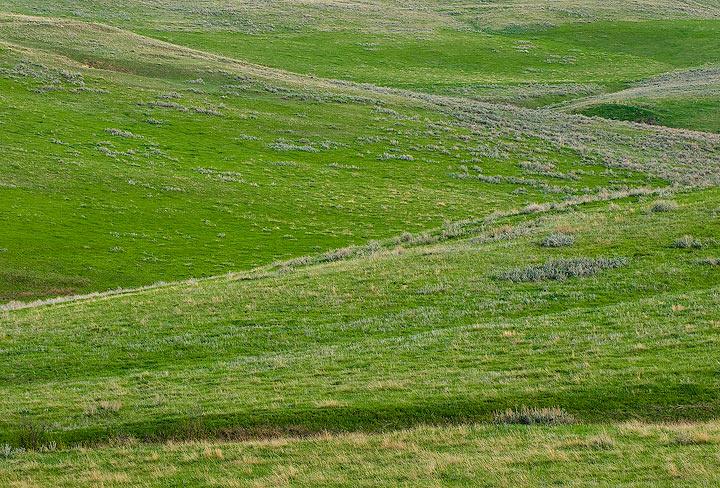 Spring, Ucross Ranch, Wyoming, grass,ucross                , photo