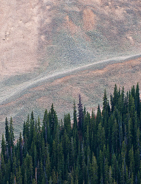 talus,conifers,trees,Colorado, Sawatch Range,Cumberland Pass              	, photo