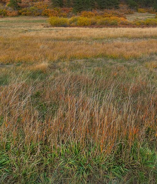 grass,autumn,fall color              , photo