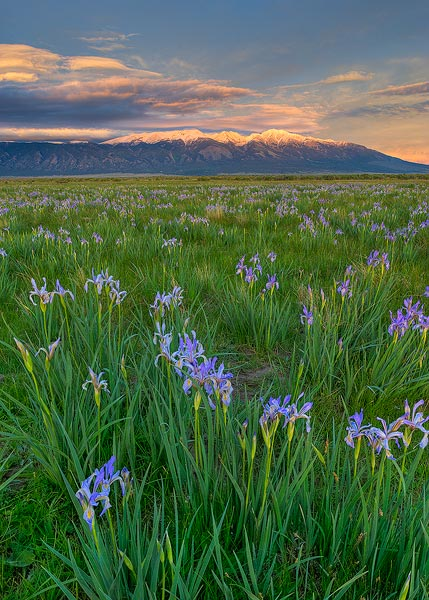 mountains,wild flowers,Blanca Peak,iris,flowers, photo