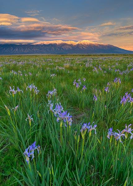 mountains,wild flowers,Blanca Peak,iris,flowers, photo