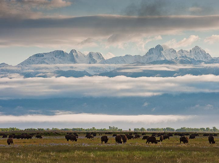 bison,clouds, photo