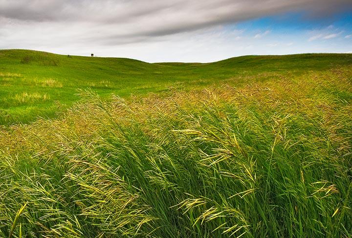 Arrowwood National Wildlife Refuge,North Dakota,prairie,grass,NWR      , photo
