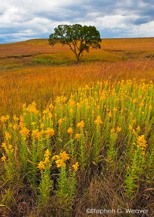 Tall Grass Prairie,Kansas,grass,Fall color,wildflowers           	, photo
