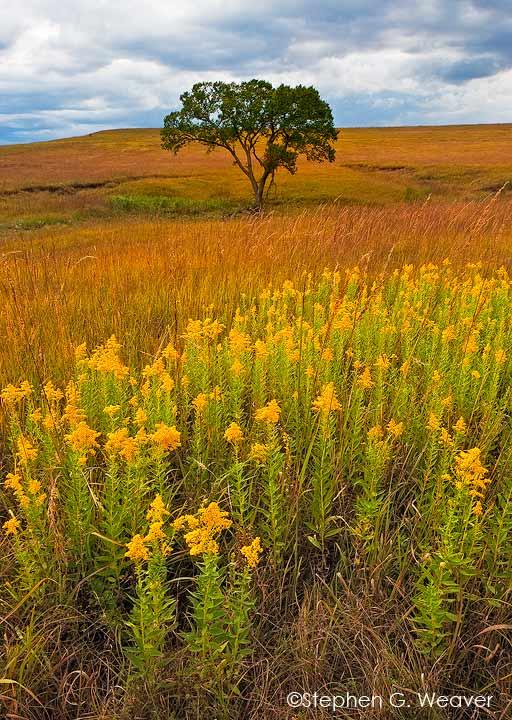 Tall Grass Prairie,Kansas,grass,Fall color,wildflowers           , photo