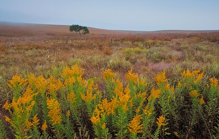 Kansas,Nature Conservancy,prairie,tall grass prairie,wild flowers,goldenrod, photo