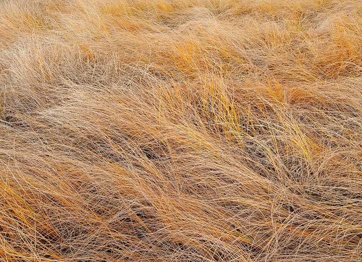 Colorado,Chico Basin Ranch,grass,Autumn, photo