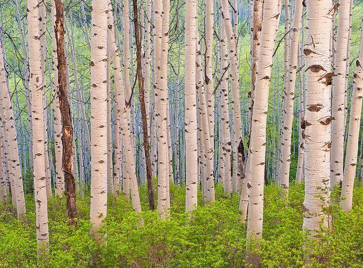 aspen,Colorado, photo