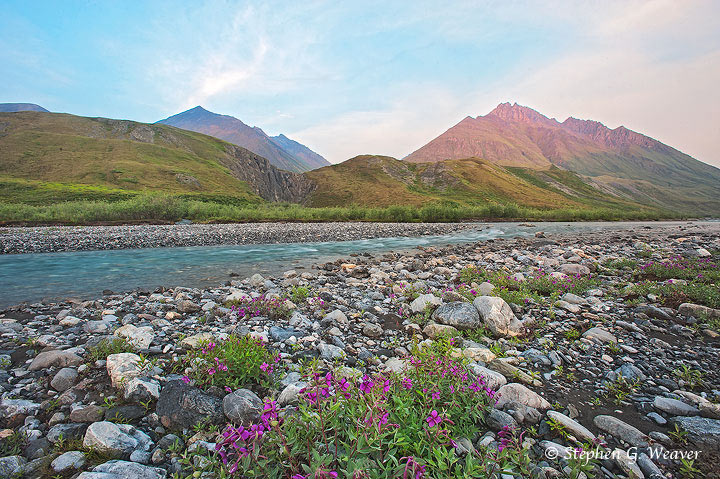 ANWR, Arctic National Wildlife Refuge, Brooks Range, Marsh Fork, fireweed, Canning River, photo