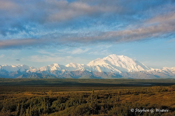 Denali on an early Summer morning as seen from near the Wonderlake Campground