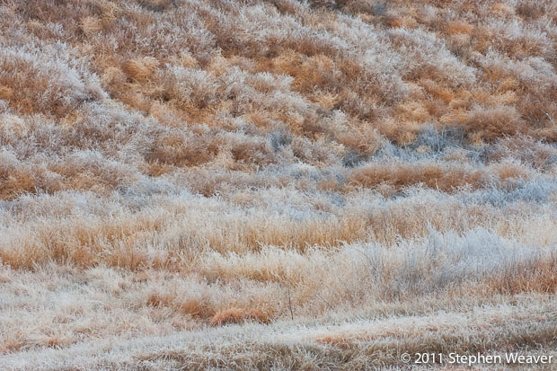 grass,frost,tumbleweeds,prairie, photo