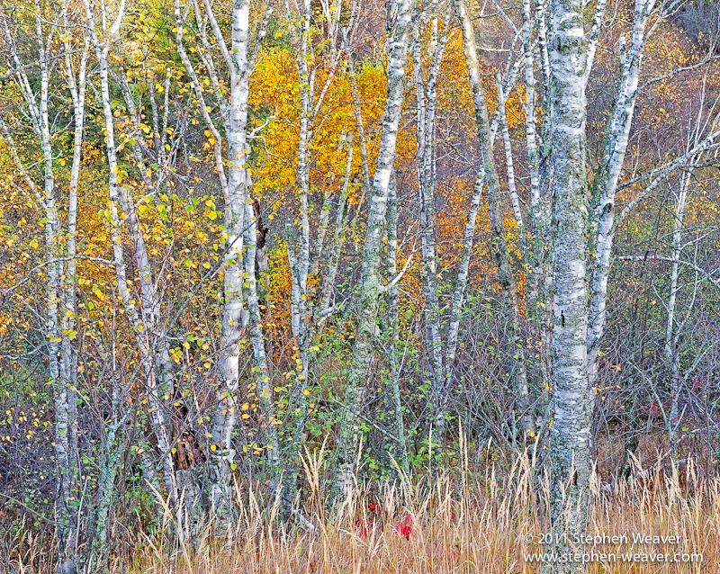 Tettegouche State Park,Minnesota,trees,Autumn, photo