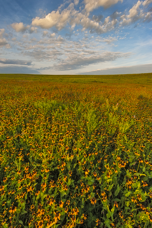 Nature Conservancy,Oklahoma,Osage County,Tall Grass Prairie Preserve,prairie, photo