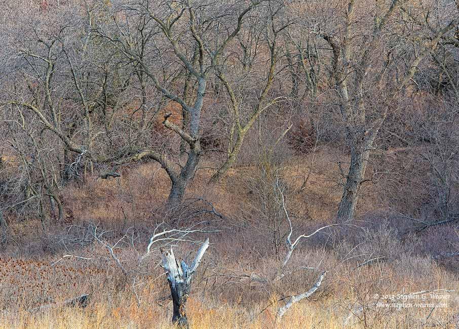 forest, winter, Kansas, photo