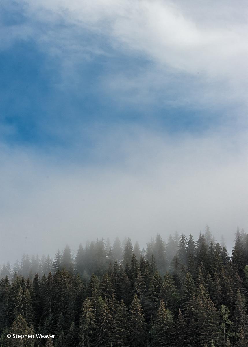 Alaska,Glacier Bay NP, fog, trees, Glacier Bay National Park, photo