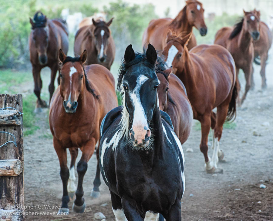 Colorado,Medano Ranch,Summer, horses, photo