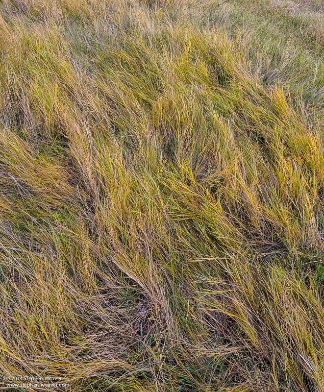 Autumn, Cheyenne Bottoms, Kansas. grass, photo