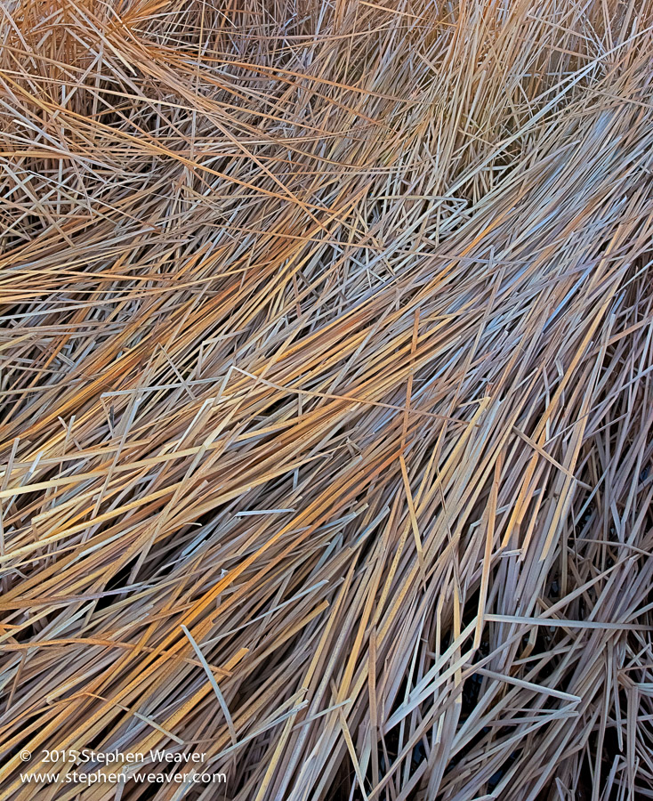 Bosque del Apache NWR,New Mexico, reeds, photo