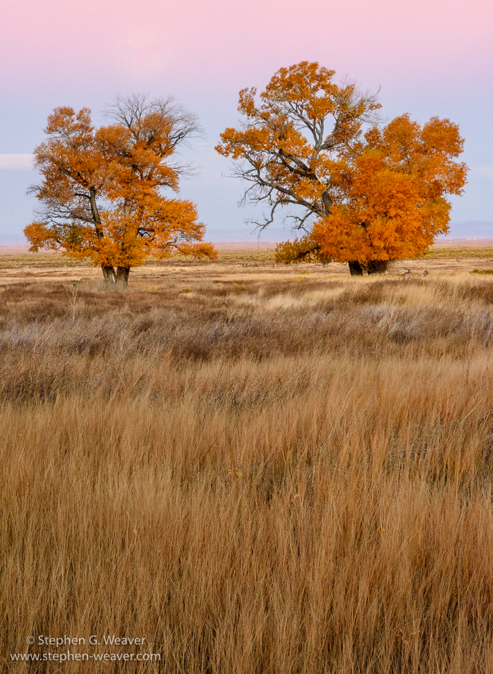 Colorado,Fall color,,Medano Ranch,Zapata Ranch, photo