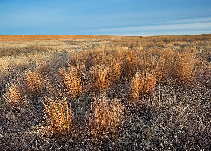 grass,big bluestem,Kansas,prairie,Winter, photo