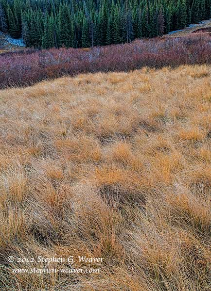 grass, meadow,Colorado, Flat Tops, photo