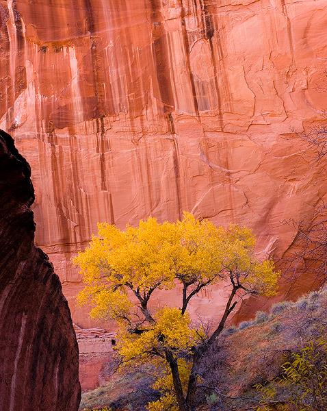 sandstone,Fall color, photo