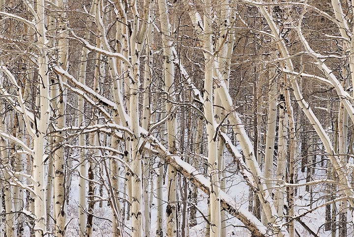 Gore Range,aspen,winter                , photo