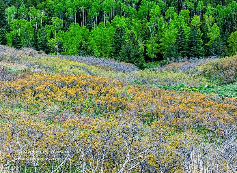 Spring,Colorado,forest, photo