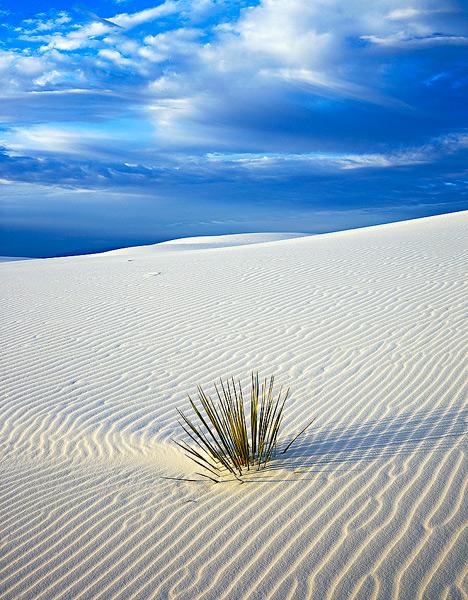dunes         , photo