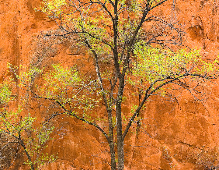 Red Rock Canyon Open Space,Colorado Springs, Colorado,red sandstone,green,Spring, photo