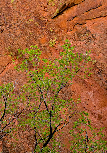Red Rock Canyon Open Space,Lyons Formation,sandstone,red,green,Colorado Springs,Colorado,Spring               	, photo
