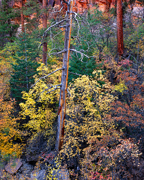 Zion National Park,autumn,fall color,National Park               	, photo